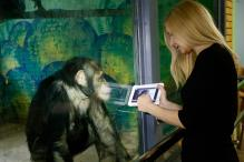 How a Touch Screen Helped a Paralysed Chimpanzee Walk Again