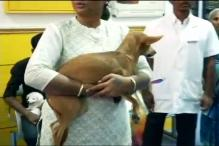 Dog Hurled From Rooftop in Chennai Found Alive