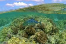 US Creates World's Largest Marine Protected Area