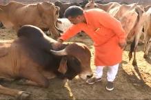 Dairy Farmers hit by Cow Vigilantes in Patiala