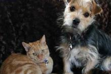 Dog People Have More Facebook Friends Than Cat People