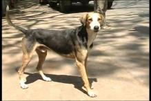 Dog Sentenced to Death For Biting Child in Pakistan