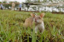 'Rat Man' Charges Rs 80 to Catch a Rodent to Save Crops in Ooty