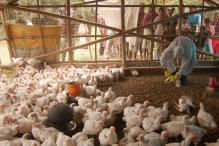 Bird Flu: Tamil Nadu on Alert; Steps to Prevent Outbreak Ordered