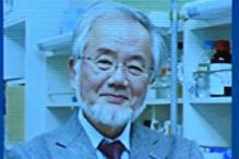 Yoshinori Ohsumi Wins Nobel Prize in Medicine For his Work on Autophagy
