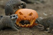 Halloween Celebrations: 5 Last-Minute Spooky Getaways Across The World