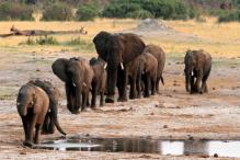 Wildlife Populations Plunge Almost 60% Since 1970: WWF