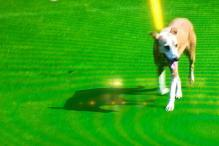 Dog Interrupts Test Match, Is Immediately Rewarded with a Twitter Account