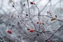 Uttarakhand Receives Season's First Snowfall on Christmas