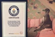 Great Dane In UK Holds Guinness Record For Tallest Living Dog In The World