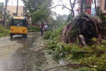 In Pics: A Day After Cyclone Vadrah Makes Landfall, Chennai Battered