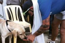 Virat Kohli's Love Affair With Dogs Reminiscent of 'The Rock'
