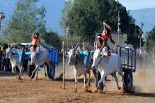 Amid Jallikattu Row, Sena MP Seeks Rollback of Ban on Bullock Cart Races