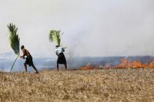 Punjab to Stop Paddy Straw Burning From This Year: HC on Air Pollution