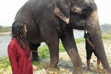 Nepal Shows the Way in Ethical Elephant Tourism