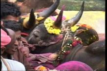 Madurai Administration Ready to Hold Jallikattu at Alanganallur: Officials