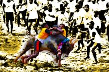 Jallikattu is Not Just Bull, It's Also About Animal Spirits
