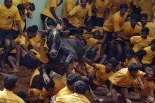 Bill to Replace Jallikattu Ordinance to be Placed in Assembly: TN Governor
