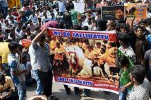 On Pongal Eve, Centre Ready With Draft Ordinance on Jallikattu
