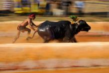 Kambala Bill Sent to President For Assent
