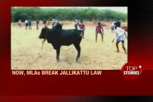 News360: Centre Ready With a Draft Ordinance on JalliKattu