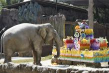 Elephant Trompita Blows Out 56 Candles on Birthday Cake