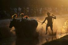 Allowing Kambala Leaves Black Mark on India: PETA