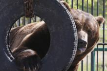 Bear Shot Dead at German Zoo After Escaping From Cage