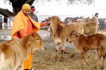 Yogi Adityanath Visits Cow Shelter Run by Mulayam's Son Prateek