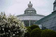 Belgian King's Colonial-Era Greenhouse Opens to Public