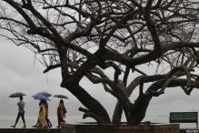 India to Have Normal Monsoon This Year, Predicts IMD