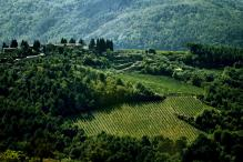 Global Wine Production Falls in 2016