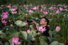 Thai Lotuses Bloom Again After 10 Years