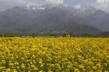 Parliament Panel Likely to Review Clearance For GM Mustard