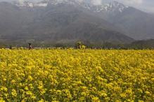 Swadeshi Jagran Manch to Write to PM Modi Against Nod to GM Mustard