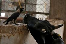 SC Declines to Stay Cattle Slaughter Rules, Seeks Explanation From Centre