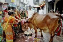 Coming Soon, Govt Certified Gau Rakshaks in Haryana and Uttarakhand