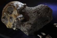 This Study Says Humans May Have Come From Europe, Not Africa