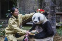 Bye Bye Basi: World's Oldest Captive Panda Dies in China