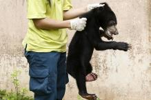 27 Animals That Are Illegally Trafficked Around The World
