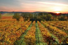 Don't Cancel Your Trip to California Wine Country