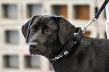 Not Her Line of Work: CIA Fires Bomb-sniffing Dog Who Flunked Smell Test
