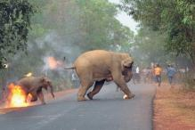 This Photograph Of Elephants Set Aflame Has Won Wildlife Photography Award