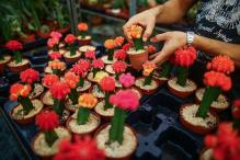 Invest In Miniature Plants, Use Teacups For Indoor Gardens