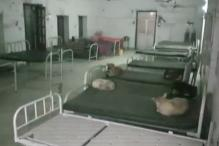 Dogs Sleep on Beds Meant For People in Bihar Hospital, Probe Ordered
