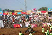 Two More People Gored to Death During Jallikattu in Tamil Nadu, Toll Now 3