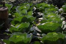 Govt Sees Huge Potential for Organic Farming in Andaman & Nicobar Islands