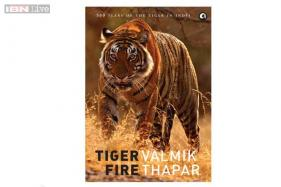 'Tiger Fire' speaks to all animal lovers