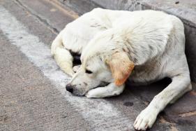 90-year-old Kerala Man Bitten by Stray Dogs, Succumbs