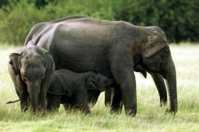 Indian Team to Bring Back Stranded Elephant from Bangladesh